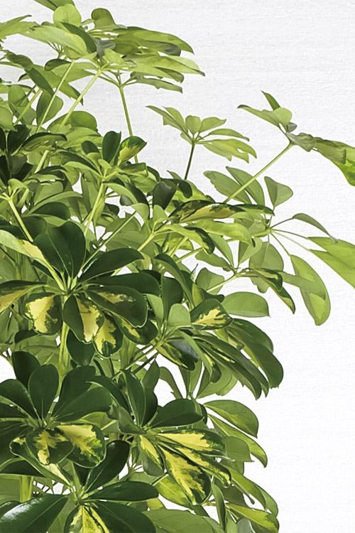 観葉植物イメージ画像